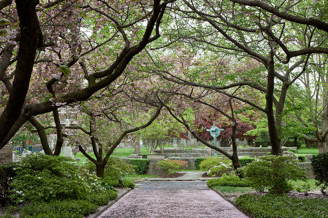 Christ Church Campus Blossoms, photo by Joanne Bouknight